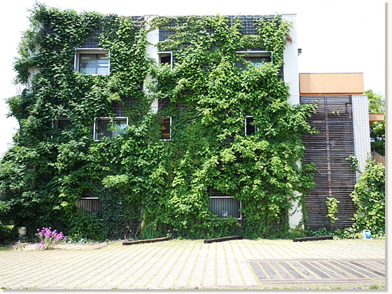 Ivy WALL(蔦の外壁)1